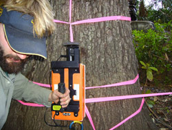 tree_radar_pic1